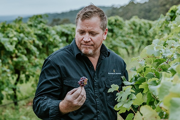Andrew Vesey checking the pinot noir bunch at the vineyard